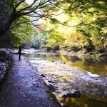粟又の滝自然遊歩道
