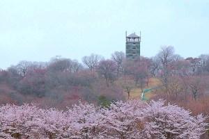 北山公園展望塔