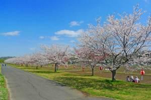 辰ノ口親水公園(展望台)