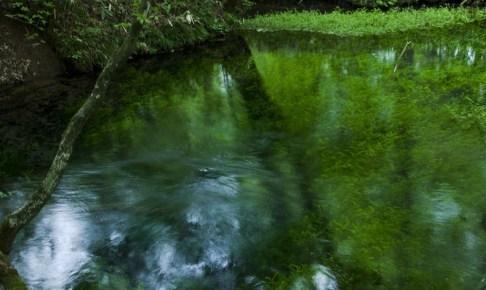 金沢清水(岩手県内水面水産技術センター「座頭清水」)