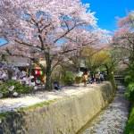 哲学の道・桜