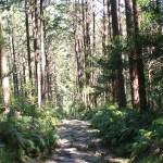 熊野古道・馬越峠