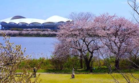 新潟県立鳥屋野潟公園