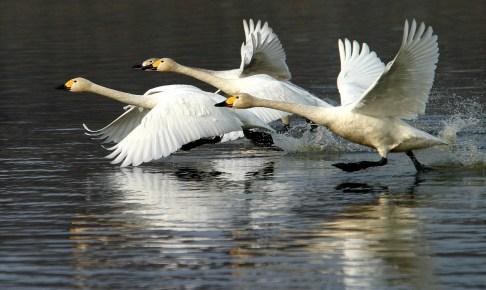 湖北野鳥センター
