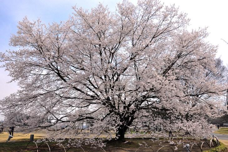 天平の丘公園(下野国分尼寺跡)