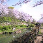 旭ヶ岡公園『桜まつり』