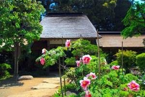 大雄寺『牡丹まつり』|大田原市