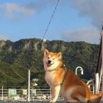 柴犬岳と房総半島横断