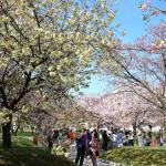 造幣局広島支局『花のまわりみち』