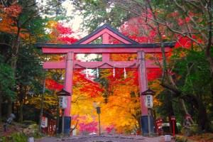 日吉大社もみじ祭(紅葉ライトアップ)