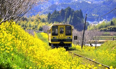 いすみ鉄道『菜の花畑のムーミン列車』