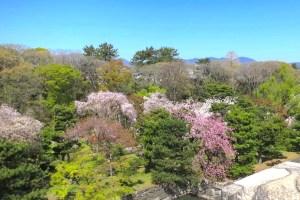 二条城桜まつり