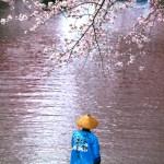 大垣市『水の都おおがき舟下り』