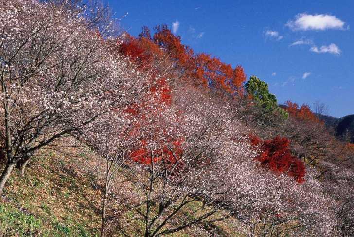 桜山公園ライトアップ