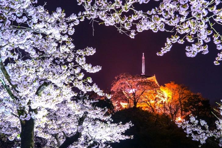 三溪園『観桜の夕べ』