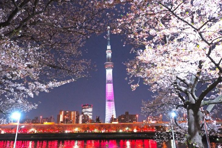 隅田公園桜まつり