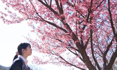 土肥桜まつり