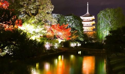 東寺・紅葉ライトアップ