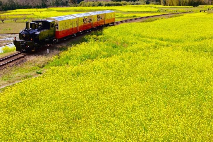 小湊鐵道 里山トロッコ列車