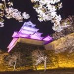 鶴ヶ城桜ライトアップ