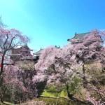 上田城千本桜まつり