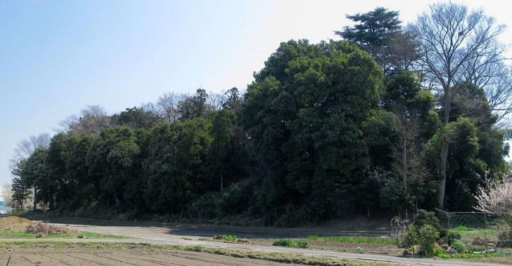 埼玉県の重要遺跡に指定される永明寺古墳
