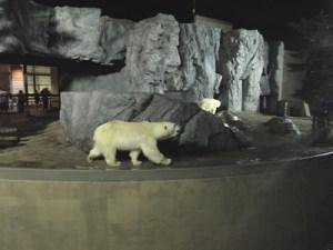 旭山動物園ナイター