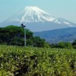 富士山と茶畑