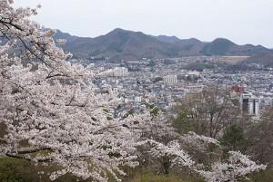 水道山公園桜
