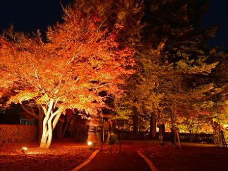 埼玉県立自然の博物館 カエデの森