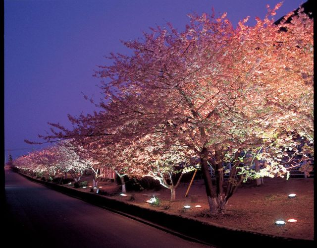 静岡県河津桜まつり