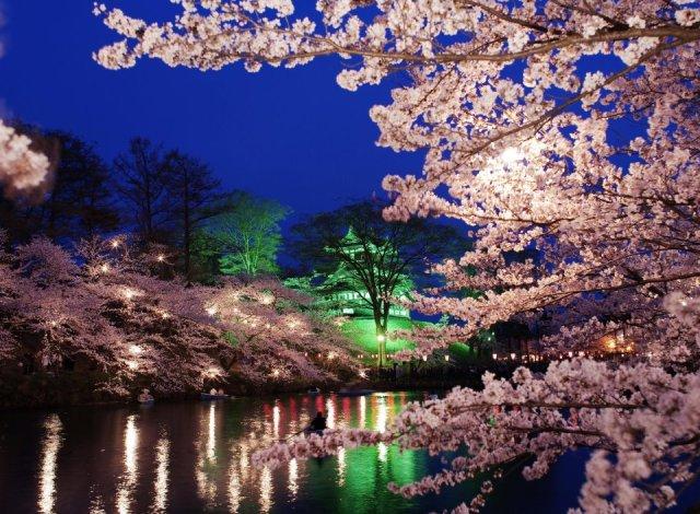 高田公園桜