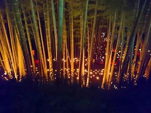 小机城址市民の森 竹灯籠まつり