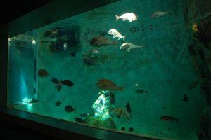 福山大学 マリンバイオセンター水族館