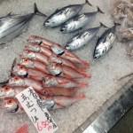 お魚いちば おとと