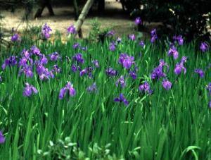 養翠園庭園