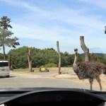 ドライブスルー動物園