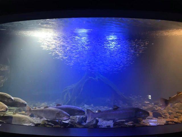 北の大地の水族館 山の水族館