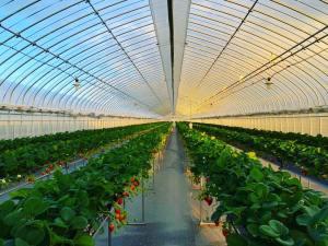 ひさだ苺農園