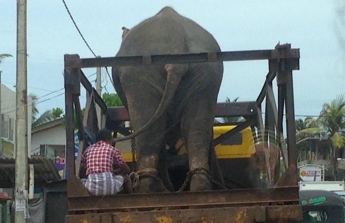 トラックの荷台の象