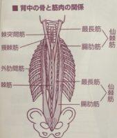 浪越系指圧、そして背骨の際をゆるめて自律神経の乱れを整える