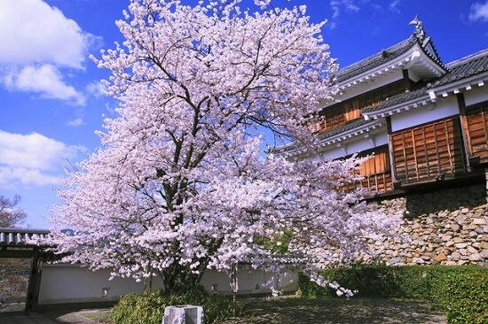 20150216-285-42-kyoto-Cherry-blossoms