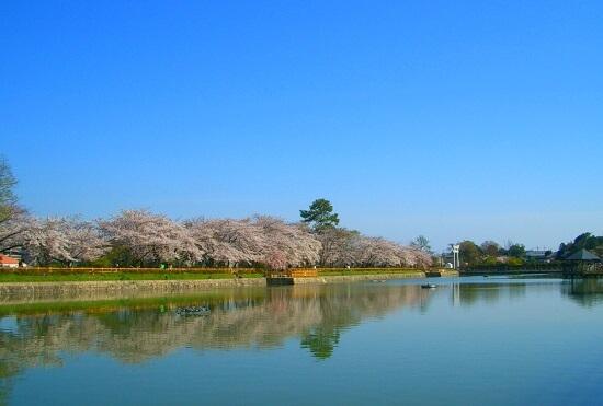20150216-285-46-kyoto-Cherry-blossoms