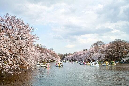 20150218-287-321-tokyo-Cherry-blossoms