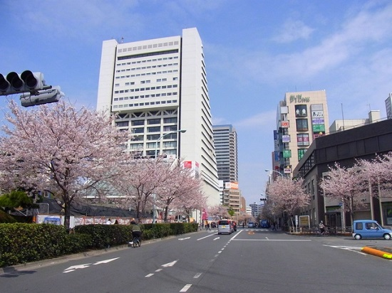 20150220-289-10-tokyo-Cherry-blossoms