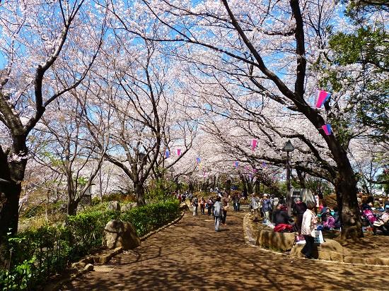 20150220-289-11-tokyo-Cherry-blossoms