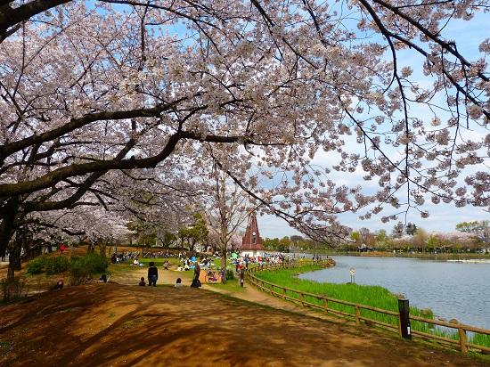 20150220-289-13-tokyo-Cherry-blossoms