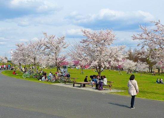 20150220-289-31-tokyo-Cherry-blossoms