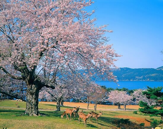 20160428-692-27-ishinomaki-kanko