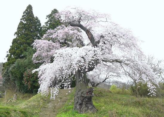 20160519-708-23-fukushima-shi-kanko